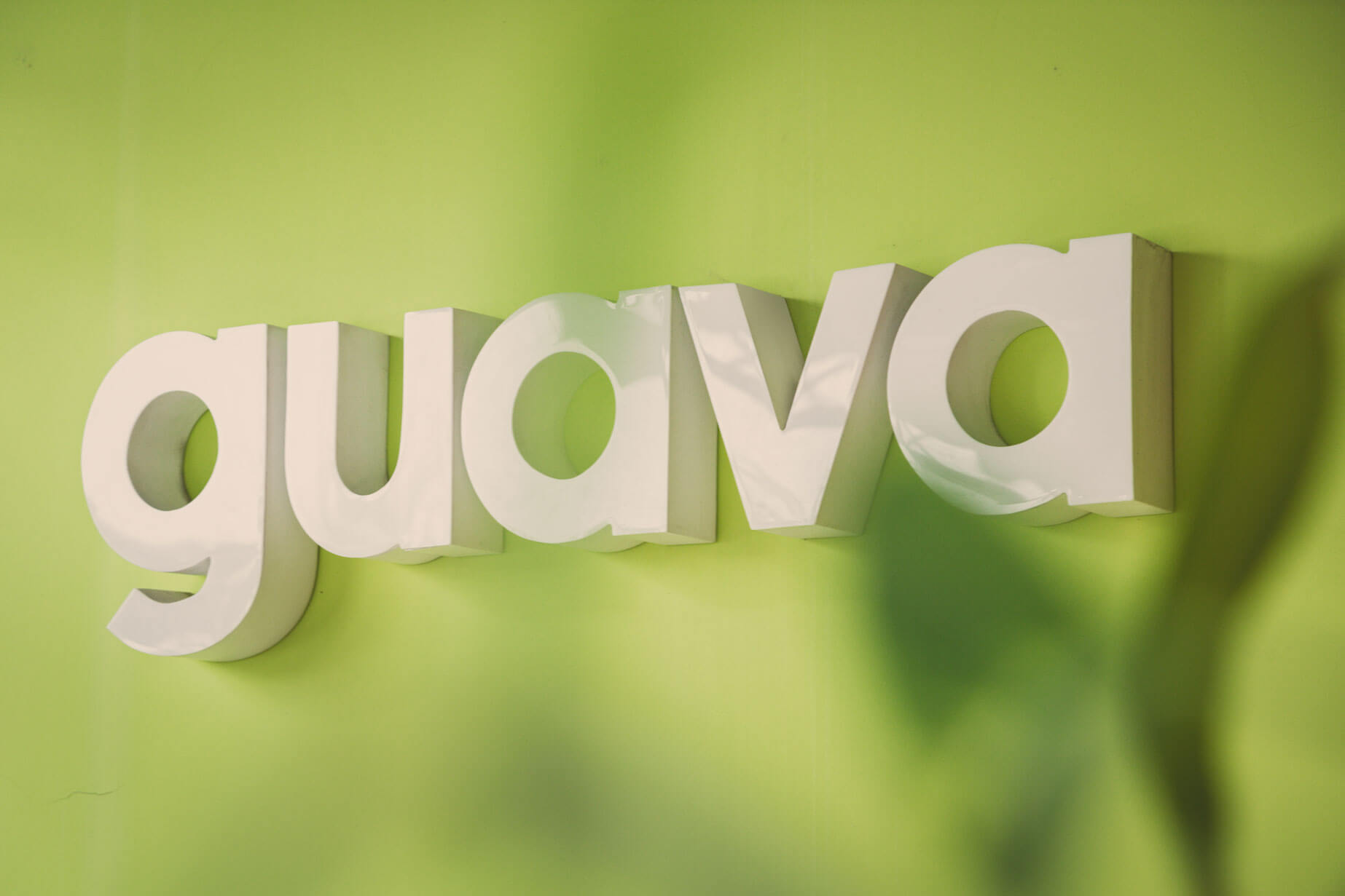 Guava's logo beyond leaves